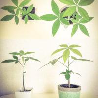 開運に役立つ観葉植物で運気アップ!の画像