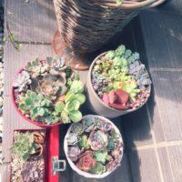 相性で考えるセンスのいい寄せ植え観葉植物の画像