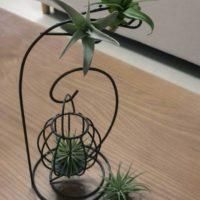 激安の観葉植物を買うならココ!3選の画像