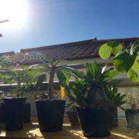 日当たり条件別、葉に合った観葉植物の画像