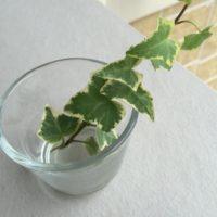 目指せ越冬!耐寒性の高い観葉植物の画像