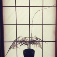 お風呂でも育てられる観葉植物の画像