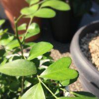 観葉植物をベランダで育てよう!の画像