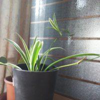 冬場の観葉植物ってどうしたらいい?おすすめの品種や対応策の画像