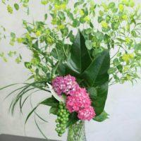 お祝いの時に喜ばれる観葉植物についての画像
