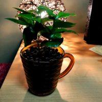 インテリアにぴったりな小さい観葉植物とは?の画像