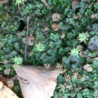 観葉植物のシダを育ててみよう!の画像