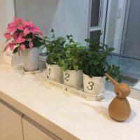 キッチンに置ける小さくかわいい観葉植物!の画像