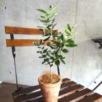 おしゃれな植物3選!の画像