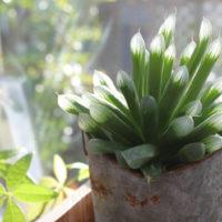ポカポカの窓際は植物にとってもお気に入りの場所。そんな「窓際族」の素敵フォトを紹介!の画像