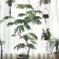 冬は日当りと温度にご注意を。寒い時期の観葉植物の管理方法とは?の画像