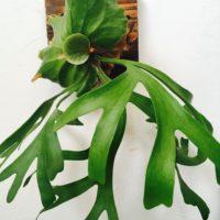壁掛けの観葉植物の4つのタイプ!の画像