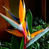 プレゼントに最適!花言葉がすてきな観葉植物をご紹介!の画像