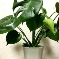 玄関をおしゃれに!見た目にも楽しめる観葉植物の画像