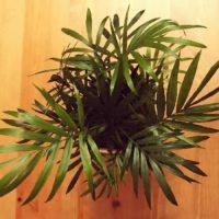 お部屋がおしゃれに!テーブルに置けるおすすめの観葉植物3選!の画像