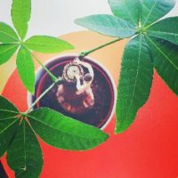 観葉植物って何?人気の観葉植物3選の画像