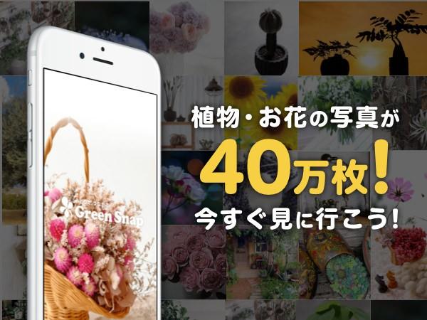 植物・お花の写真が40万枚!