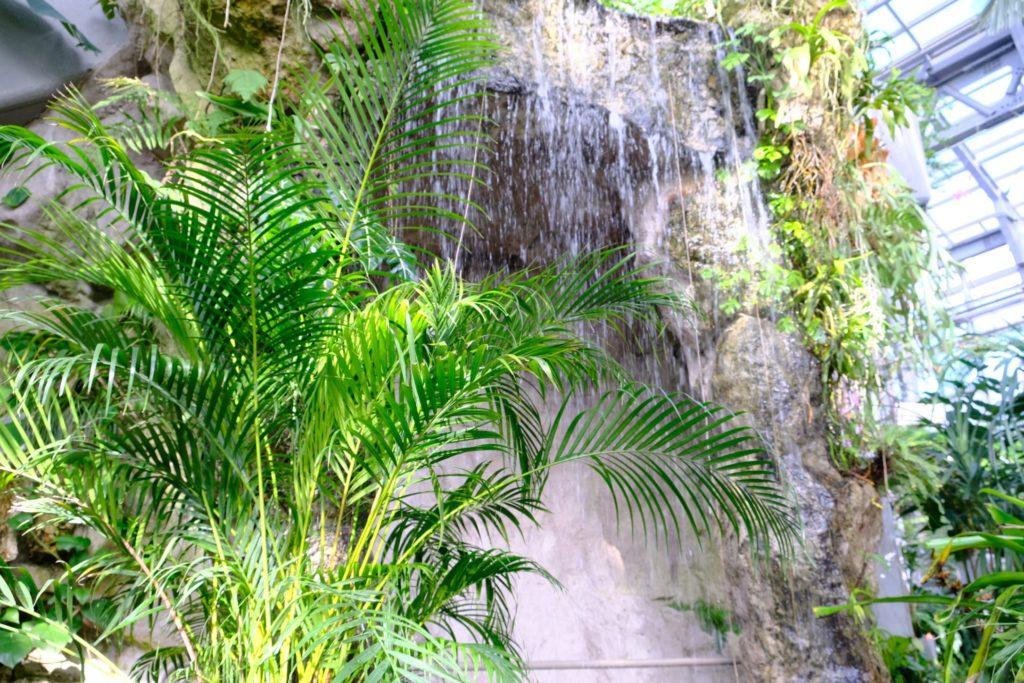 温室内には滝も!