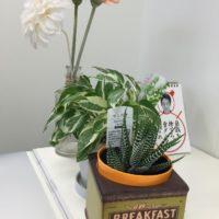 植物はレンタルがお得!植物のある生活を始めてみませんか。の画像