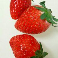 ガーデニング初心者向け!イチゴ栽培に使うガーデンツールの画像