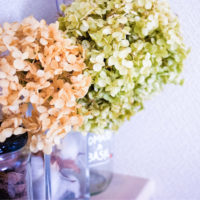 アジサイ・アナベルの花でドライフラワーを作ろうの画像