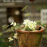 ガーデンツールを準備してクレマチスを育てようの画像