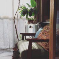 DIYで部屋をおしゃれに!ゴムの木で挑戦しようの画像