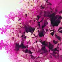 タイ・バンコクの花事情をレポート!花がいっぱいの国に癒されてきました。の画像