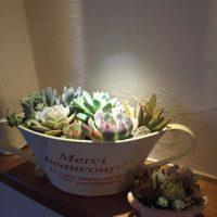 鉢が命!多肉植物とマッチする選び方の画像