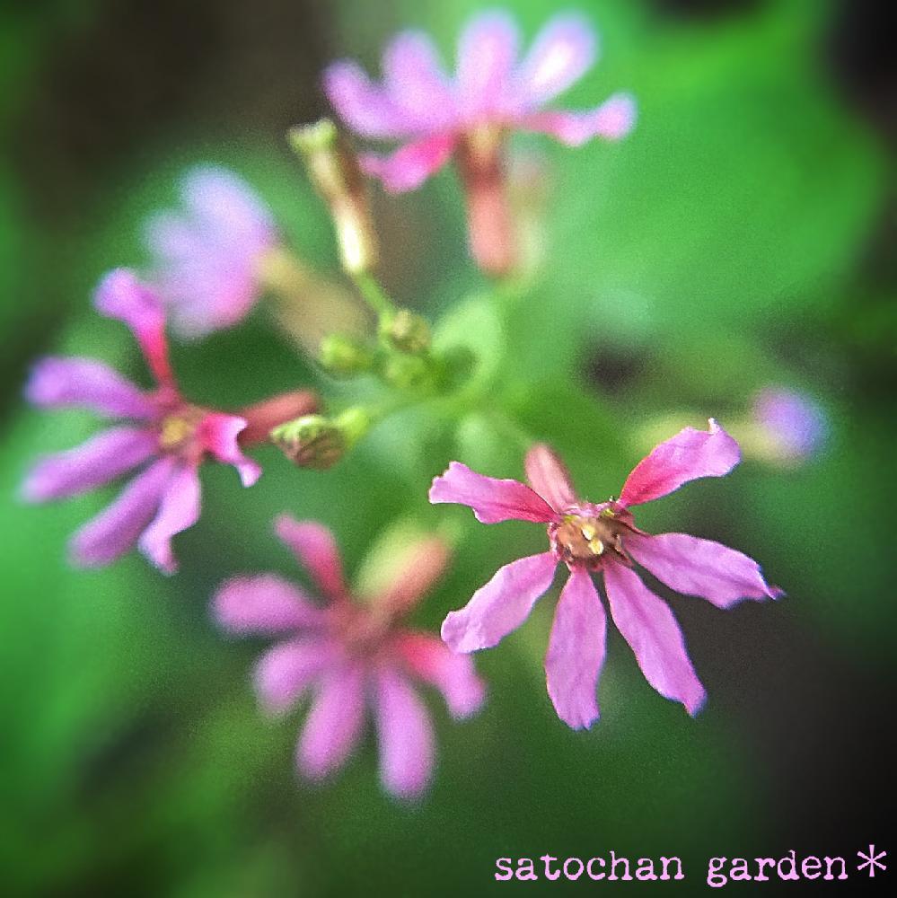 Photo by satochan✳︎さん
