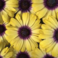 花は真上から撮ると、よりいっそう可愛い♡画面が花いっぱいの素敵フォト9選の画像