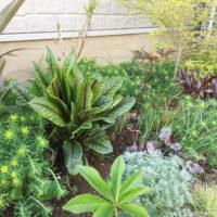 日陰や半日陰にも彩りを加えてくれる、シェードガーデンにぴったりの植物11選!の画像
