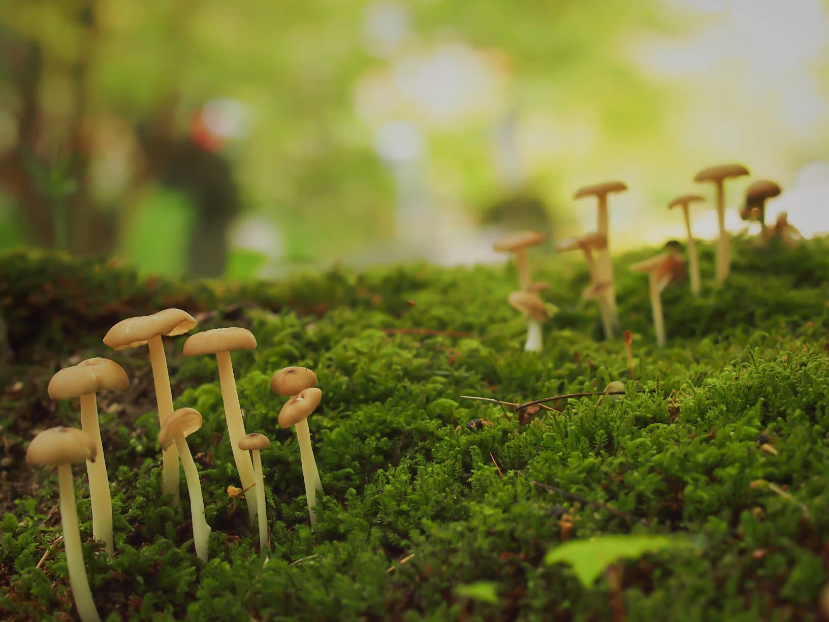 涼を感じる「苔」を日常に。マクロな苔の世界を覗いてみよう!