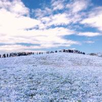 ゴールデンウィーク後半はどこへ行く? お天気いい日は、花畑へ行こう!の画像