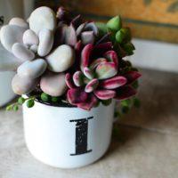 """お気に入りのカップに飾ろう! 多肉植物の""""マグカップ寄せ""""が可愛い♡の画像"""