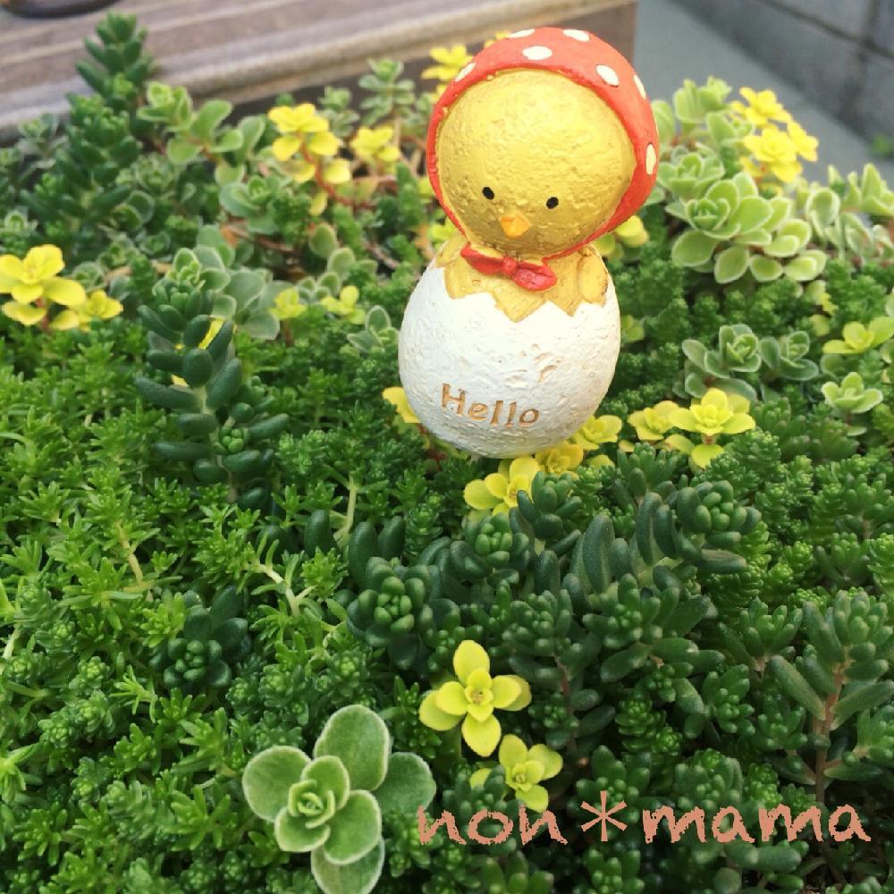 Photo by のんmamaさん