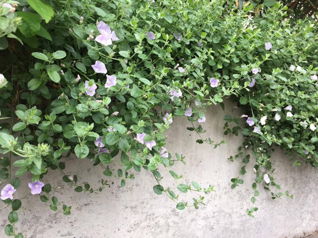 家の外構から垂らして育てたい、おすすめの「つる性植物」7選!