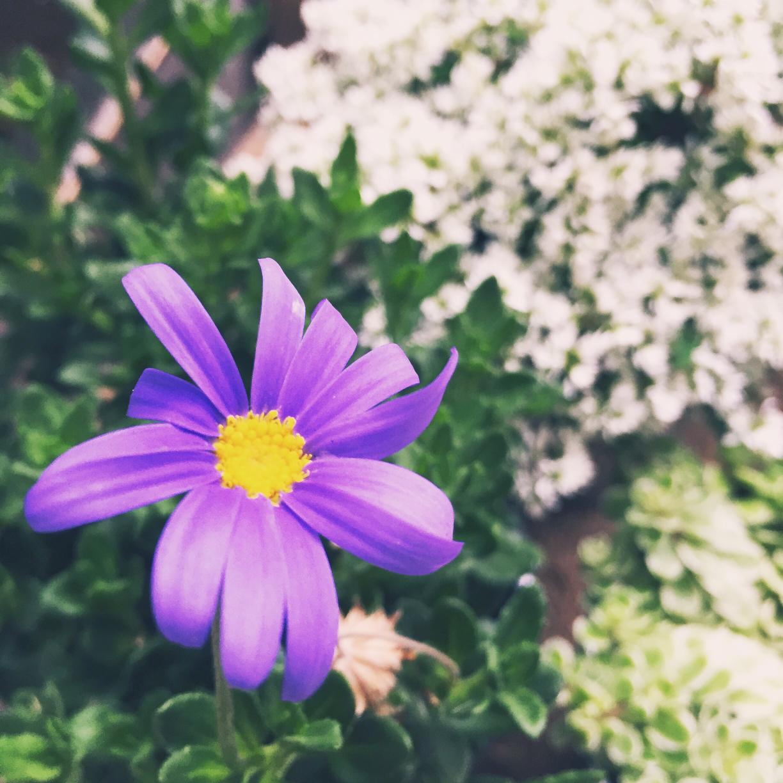 Photo by Botanical_Life1978さん