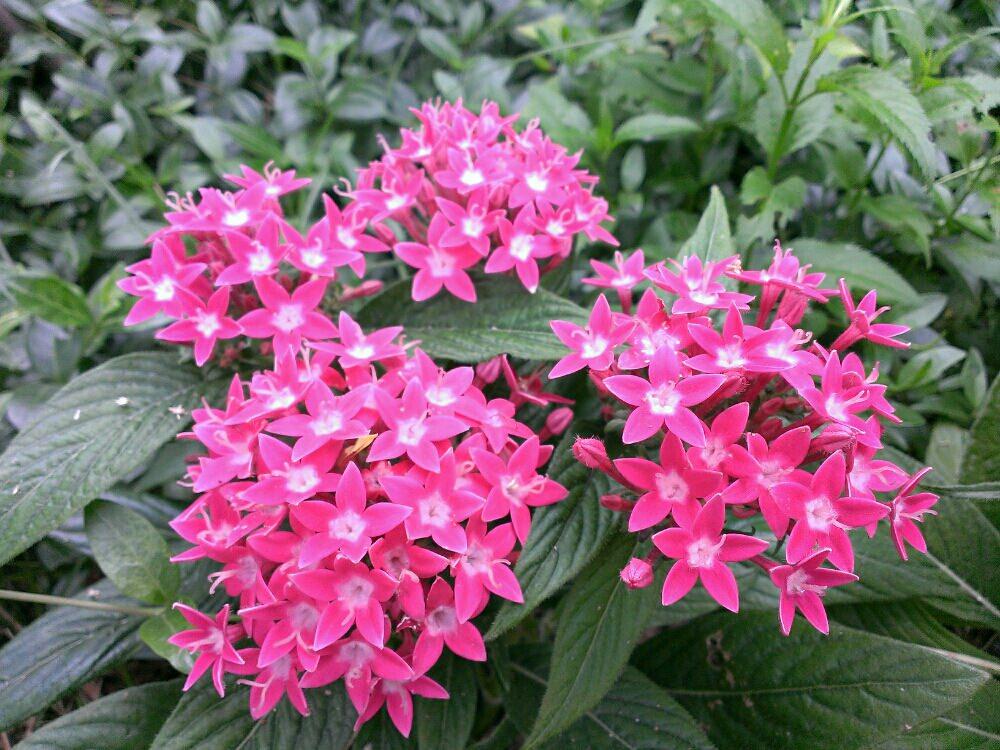 初夏の花壇で育てたい!夏の暑さや強い日差しにも負けない植物9選