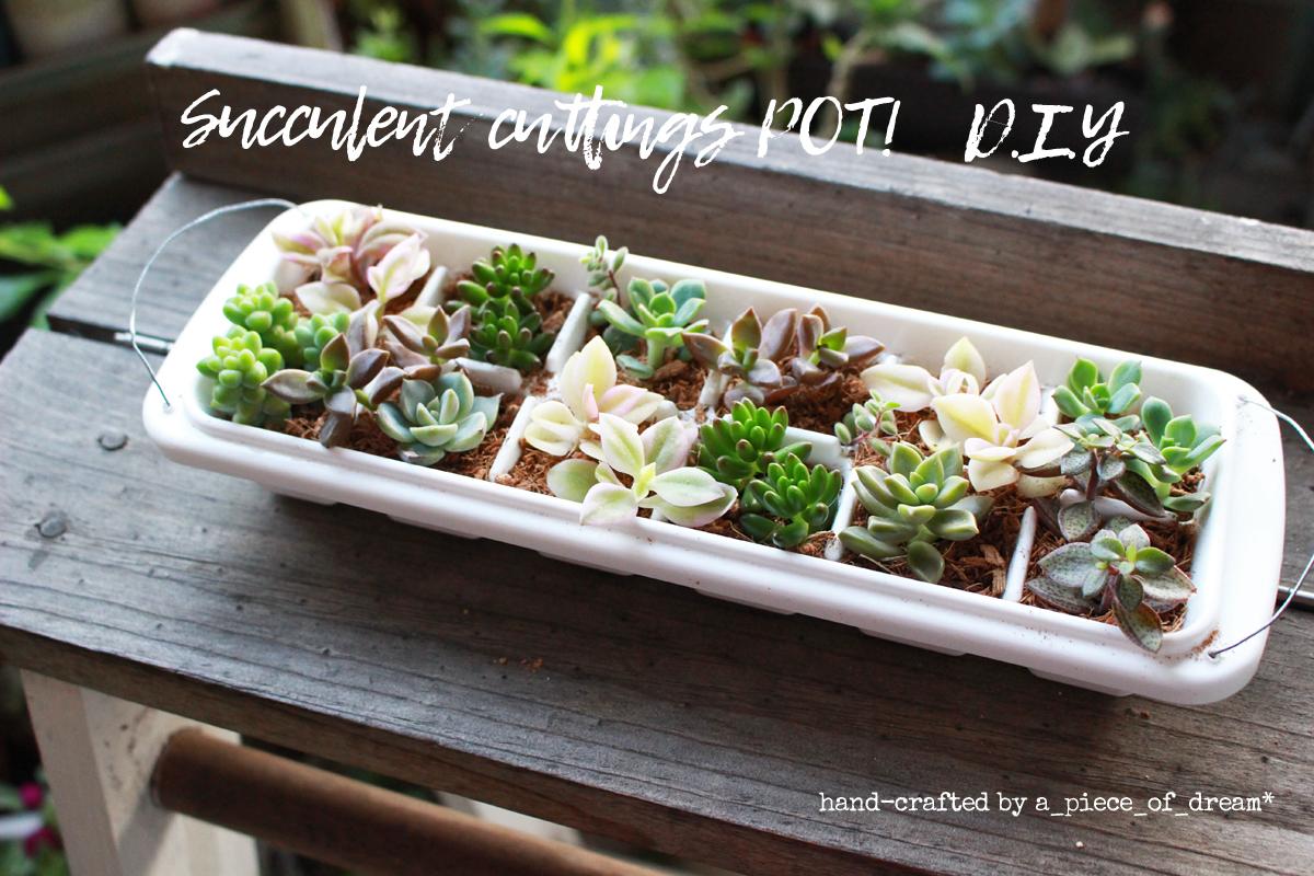簡単DIY!vol.9「100円製氷ケース」で多肉ポット作り方