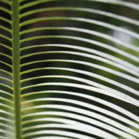 葉っぱのユニークな造形は主役にもなる! 葉っぱアートフォト9選の画像