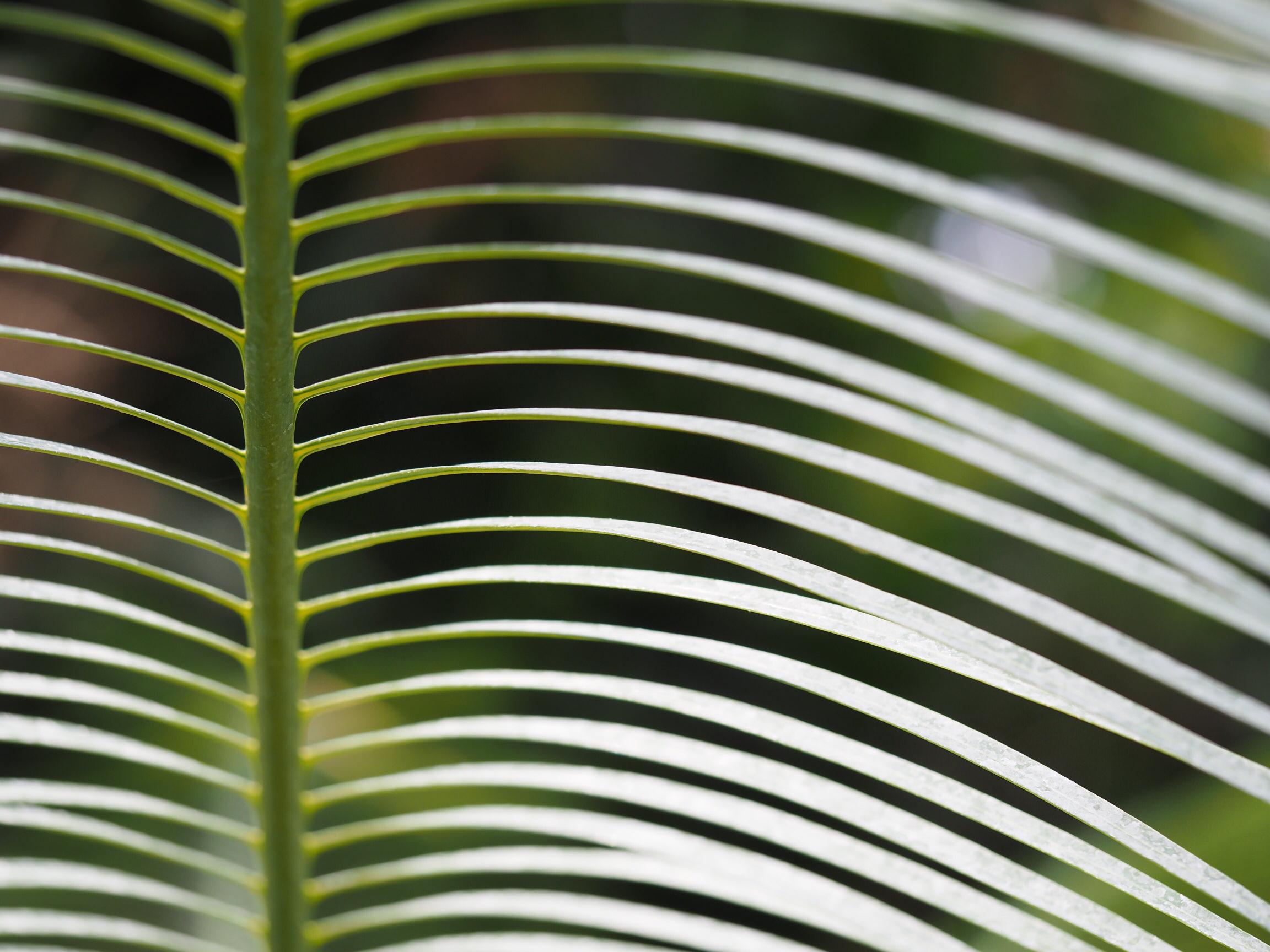 葉っぱのユニークな造形は主役にもなる! 葉っぱアートフォト9選
