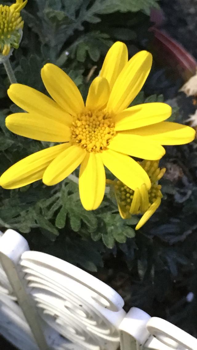 Photo by 花が好きさん