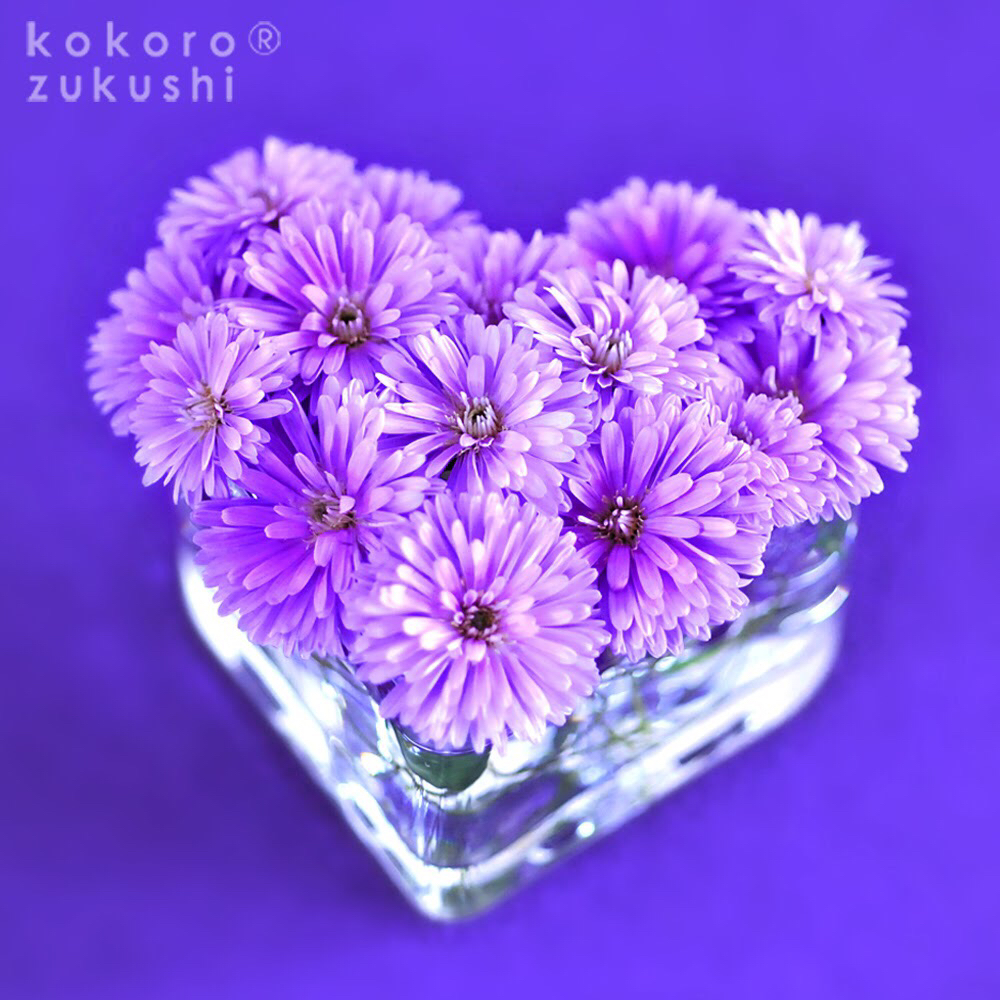 Photo by kokorozukushiさん