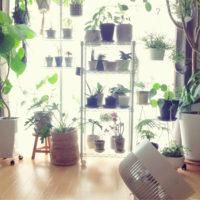 真夏の水やりや置き場所は? 観葉植物の夏の管理方法についておさらいします!の画像