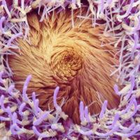 カラフルさが目に飛び込んでくる! 美しくき野菜たち9選の画像