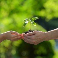 おやこで育てる 〜植物を育てることで子供の探究心を育む〜の画像
