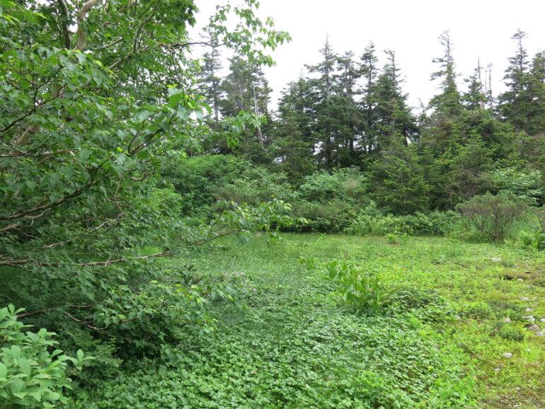 三俣山荘 第一庭園
