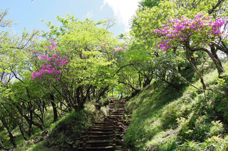 新緑の塔ノ岳大倉屋根コース