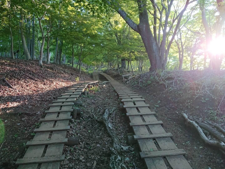 大倉尾根周辺の木道